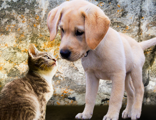 Znalazłem psa/kota - co robić?