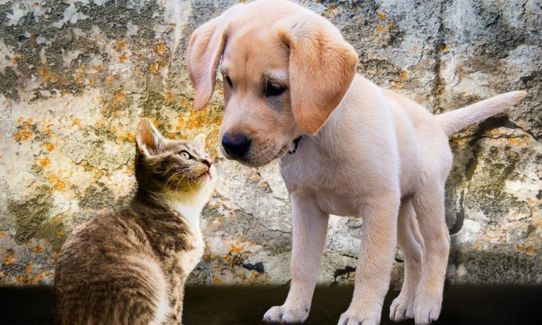 Znalazłem psa, kota – co zrobić, gdzie dzwonić