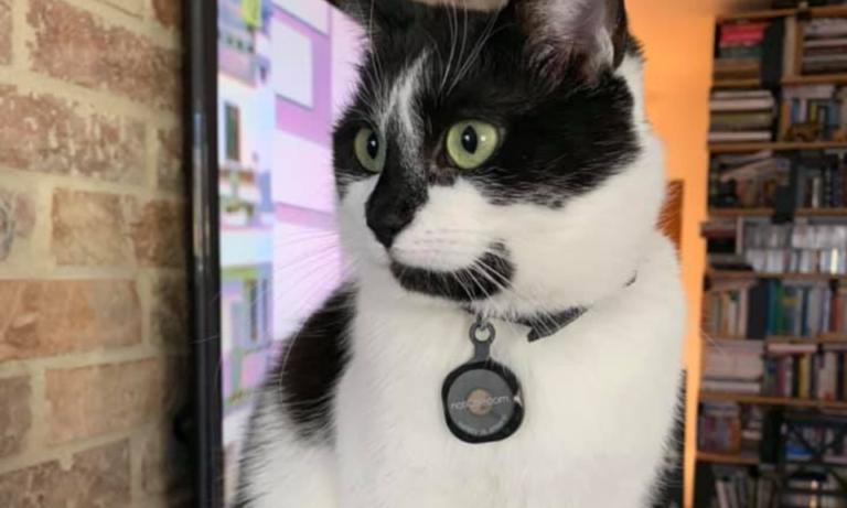Wyprawka dla kota – 10 pozycji