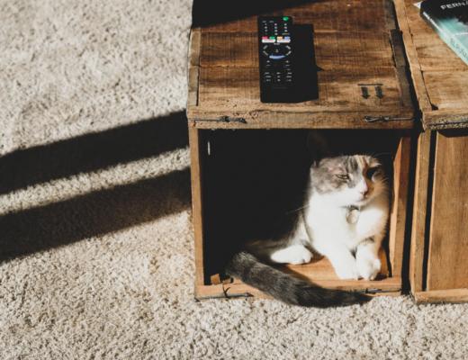 Dlaczego koty się chowają? 5 powodów