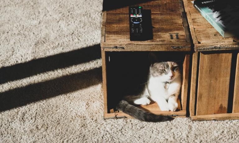 Dlaczego koty się chowają – 5 powodów